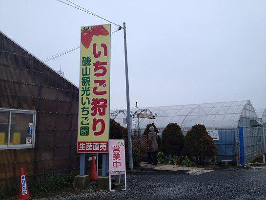 いちご狩り4.jpg