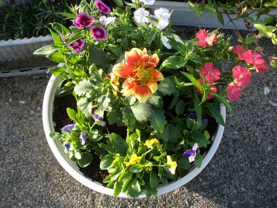 寄せ植え花.JPG